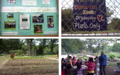 Cooking with the Washington Youth Garden